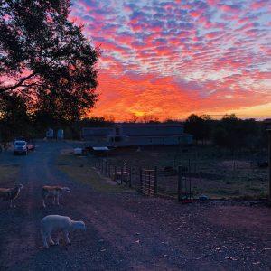 HFR Sunrise